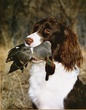 Sawyer with Greenwing.jpg