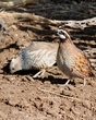 Scaled and Bobwhite.jpg