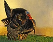 Turkey15.jpg