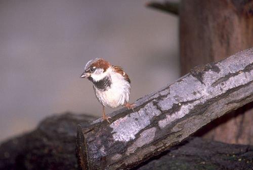 Birds20001.jpg