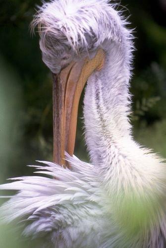 Birds20003.jpg