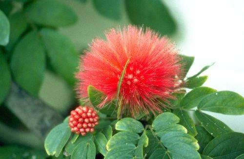 Floral_Design0002.jpg