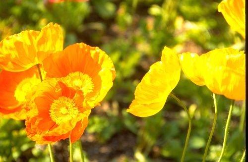 Floral_Design0003.jpg