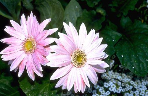 Floral_Design0004.jpg