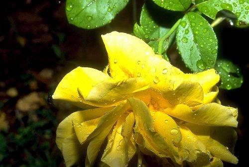 FlowersTrees0001.jpg