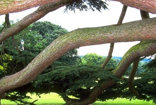 FlowersTrees0002.jpg