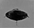 11-28-55 ATLANTIC OCEAN--UFOCASEBOOK.jpg