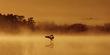 Birds (3).jpg