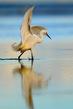 Birds (39).jpg