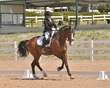 DRESSAGE FOR CURE 2018 1003.jpg