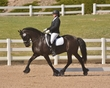 DRESSAGE FOR CURE 2018 1403.jpg