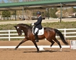 DRESSAGE FOR CURE 2018 1426.jpg
