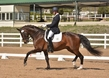 DRESSAGE FOR CURE 2018 1427.jpg