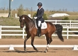 DRESSAGE FOR CURE 2018 1437.jpg