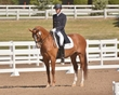 DRESSAGE FOR CURE 2018 421.jpg