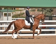 DRESSAGE FOR CURE 2018 431.jpg