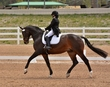 DRESSAGE FOR CURE SATURDAY 2018 1000.jpg