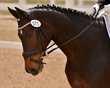 DRESSAGE FOR CURE SATURDAY 2018 1003.jpg