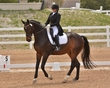 DRESSAGE FOR CURE SATURDAY 2018 1011.jpg
