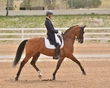 DRESSAGE FOR CURE SATURDAY 2018 1043.jpg
