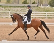 DRESSAGE FOR CURE SATURDAY 2018 1050.jpg