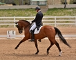 DRESSAGE FOR CURE SATURDAY 2018 1054.jpg