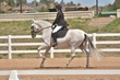 DRESSAGE FOR CURE SATURDAY 2018 2111.jpg