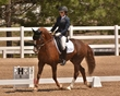DRESSAGE FOR CURE SATURDAY 2018 2198.jpg