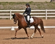 DRESSAGE FOR CURE SATURDAY 2018 2202.jpg