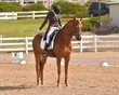 DRESSAGE FOR CURE SATURDAY 2018 385.jpg