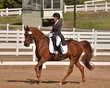 DRESSAGE FOR THE CURE SUNDAY 2018 475.jpg