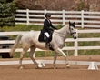 DRESSAGE FOR THE CURE SUNDAY 2018 783.jpg