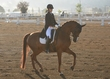 ESTES PARK DRESSAGE FRI AND SAT 017.jpg