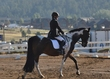 ESTES PARK DRESSAGE FRI AND SAT 5448.jpg