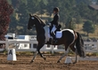 ESTES PARK DRESSAGE FRI AND SAT 5457.jpg