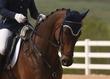 JUNE 1 HORSE PARK 1132.jpg