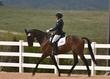 JUNE 1 HORSE PARK 1136.jpg