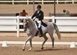 JUNE 1 HORSE PARK 1975(1).jpg