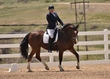 dressage for cure sat afternoon 101.jpg