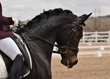 dressage for cure sat afternoon 887.jpg