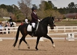 dressage for cure sat afternoon 897.jpg