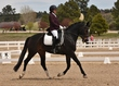 dressage for cure sat afternoon 899.jpg