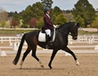 dressage for cure sat afternoon 900.jpg