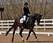 dressage for the cure 2019 1803.jpg