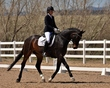 dressage for the cure 2019 1805.jpg