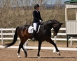 dressage for the cure 2019 1806.jpg
