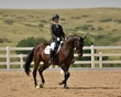 dressage in the rockies 3 and 4 1045.jpg