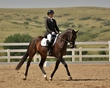 dressage in the rockies 3 and 4 1046.jpg