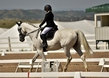 dressage in the rockies 3 and 4 1125.jpg