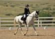 dressage in the rockies 3 and 4 1132.jpg